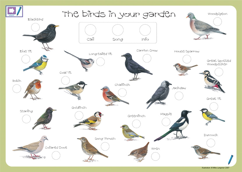 Backyard Birds Houston 2017 2018 Best Cars Reviews